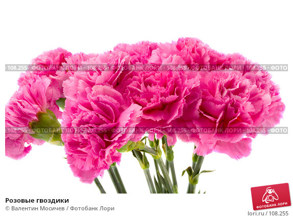 Розовые гвоздики, фото № 108255, снято 31 марта 2007 г. (c) Валентин Мосичев / Фотобанк Лори