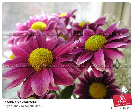 Розовые хризантемы, фото № 119371, снято 9 апреля 2006 г. (c) Дудакова / Фотобанк Лори