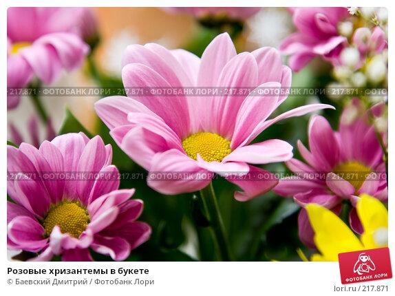 Розовые хризантемы в букете, фото № 217871, снято 20 октября 2016 г. (c) Баевский Дмитрий / Фотобанк Лори