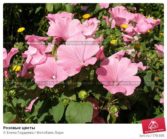 Розовые цветы, фото № 179935, снято 14 августа 2006 г. (c) Елена Гордеева / Фотобанк Лори