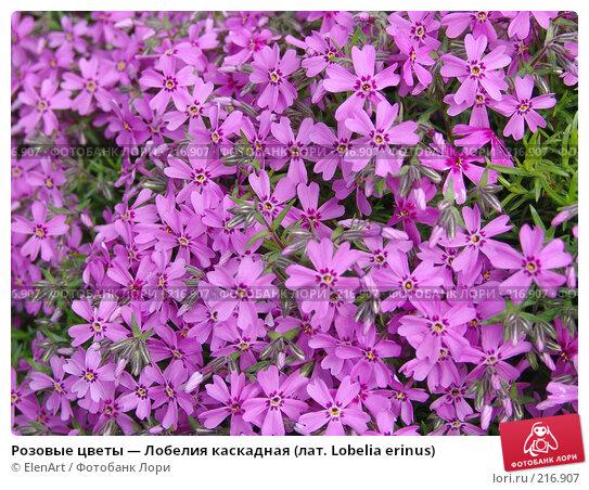 Купить «Розовые цветы — Лобелия каскадная (лат. Lobelia erinus)», фото № 216907, снято 25 марта 2018 г. (c) ElenArt / Фотобанк Лори