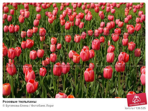 Купить «Розовые тюльпаны», фото № 139535, снято 28 мая 2007 г. (c) Бутинова Елена / Фотобанк Лори