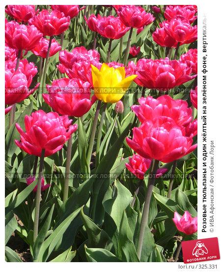 Розовые тюльпаны и один жёлтый на зелёном фоне, вертикально, фото № 325331, снято 30 апреля 2008 г. (c) ИВА Афонская / Фотобанк Лори