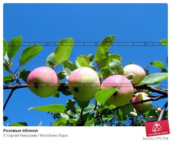 Розовые яблоки, фото № 171719, снято 11 августа 2007 г. (c) Сергей Николаев / Фотобанк Лори