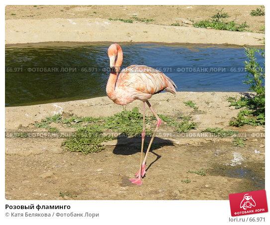 Розовый фламинго, фото № 66971, снято 23 июня 2007 г. (c) Катя Белякова / Фотобанк Лори
