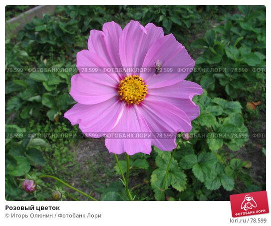 Розовый цветок, фото № 78599, снято 28 июля 2005 г. (c) Игорь Олюнин / Фотобанк Лори