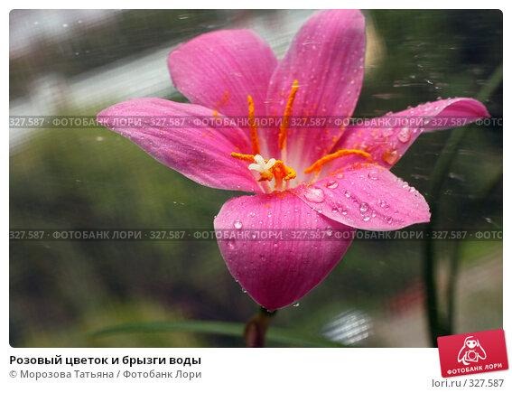 Розовый цветок и брызги воды, фото № 327587, снято 17 июня 2008 г. (c) Морозова Татьяна / Фотобанк Лори