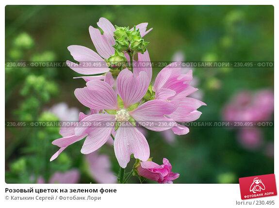 Купить «Розовый цветок на зеленом фоне», фото № 230495, снято 15 июля 2007 г. (c) Катыкин Сергей / Фотобанк Лори