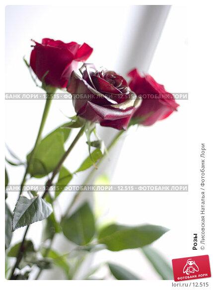 Розы, фото № 12515, снято 20 декабря 2005 г. (c) Лисовская Наталья / Фотобанк Лори