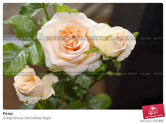 Розы, фото № 110495, снято 15 июля 2007 г. (c) Asja Sirova / Фотобанк Лори