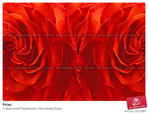 Купить «Розы», фото № 213991, снято 27 января 2008 г. (c) Анатолий Теребенин / Фотобанк Лори