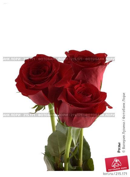 Розы, фото № 215171, снято 1 марта 2008 г. (c) Валерия Потапова / Фотобанк Лори