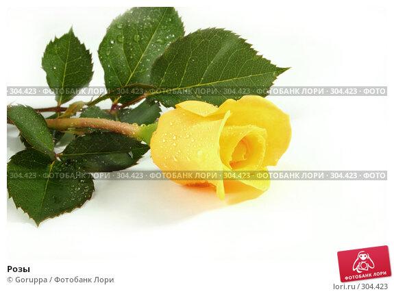 Розы, фото № 304423, снято 28 мая 2008 г. (c) Goruppa / Фотобанк Лори