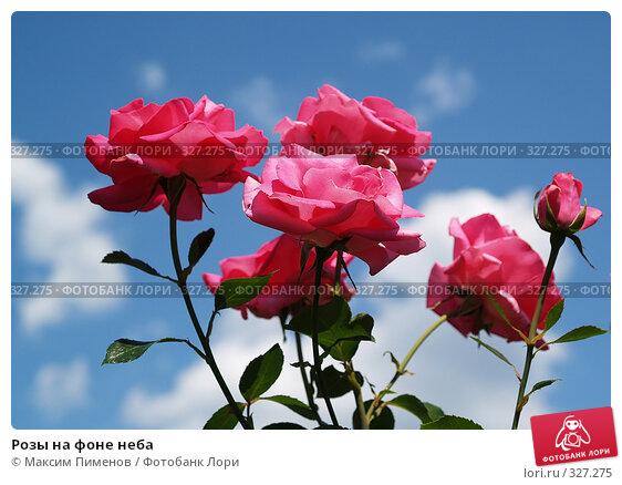 Розы на фоне неба, фото № 327275, снято 9 июля 2006 г. (c) Максим Пименов / Фотобанк Лори