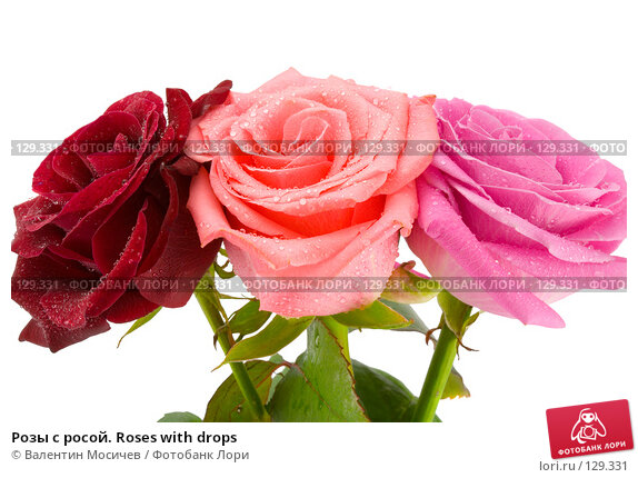 Купить «Розы с росой. Roses with drops», фото № 129331, снято 3 марта 2007 г. (c) Валентин Мосичев / Фотобанк Лори