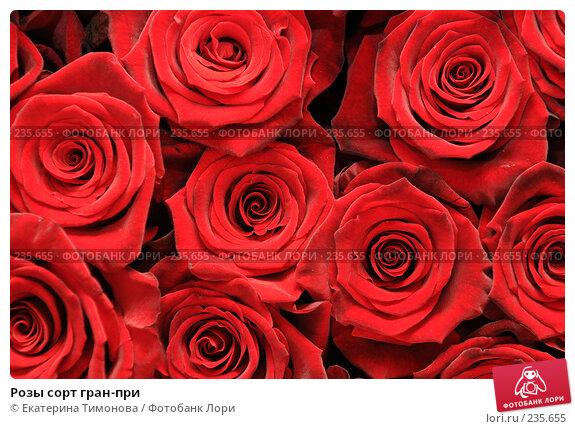 Розы сорт гран-при, фото № 235655, снято 3 марта 2007 г. (c) Екатерина Тимонова / Фотобанк Лори