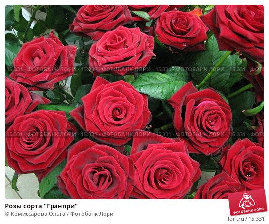 """Купить «Розы сорта """"Гранпри""""», фото № 15331, снято 11 декабря 2006 г. (c) Комиссарова Ольга / Фотобанк Лори"""