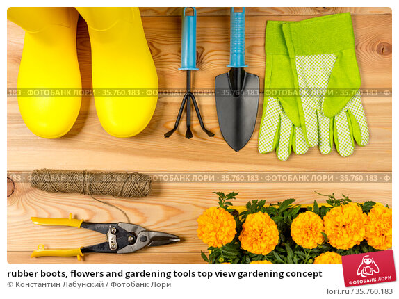 rubber boots, flowers and gardening tools top view gardening concept. Стоковое фото, фотограф Константин Лабунский / Фотобанк Лори