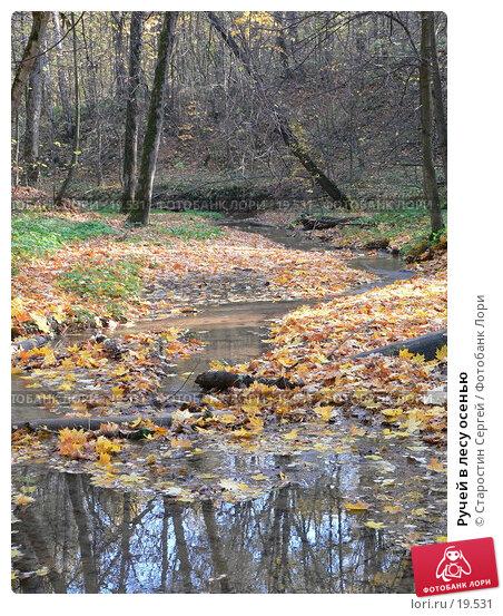 Купить «Ручей в лесу осенью», фото № 19531, снято 25 мая 2018 г. (c) Старостин Сергей / Фотобанк Лори
