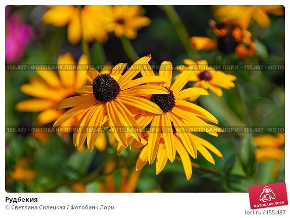 Рудбекия, фото № 155487, снято 2 октября 2007 г. (c) Светлана Силецкая / Фотобанк Лори