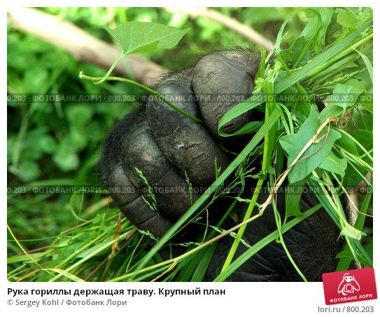 Зрелая женщина фото лекарственных растений россии фото крупным планом фото палатки имбиря члены большая грудь