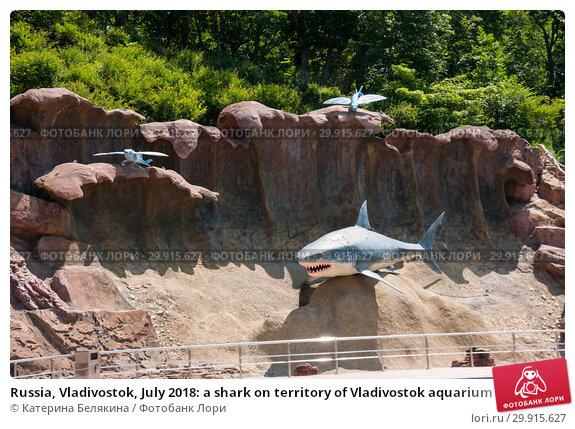 Купить «Russia, Vladivostok, July 2018: a shark on territory of Vladivostok aquarium», фото № 29915627, снято 28 июля 2018 г. (c) Катерина Белякина / Фотобанк Лори