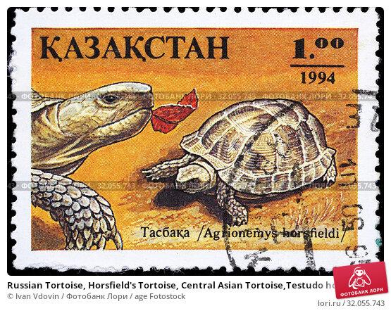 Russian Tortoise, Horsfield's Tortoise, Central Asian Tortoise,Testudo horsfieldii, Agrionemys horsfieldii, postage stamp, Kazakhstan, 1994. (2015 год). Редакционное фото, фотограф Ivan Vdovin / age Fotostock / Фотобанк Лори