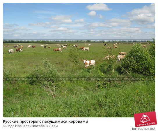 Русские просторы с пасущимися коровами, фото № 304863, снято 9 мая 2008 г. (c) Лада Иванова / Фотобанк Лори