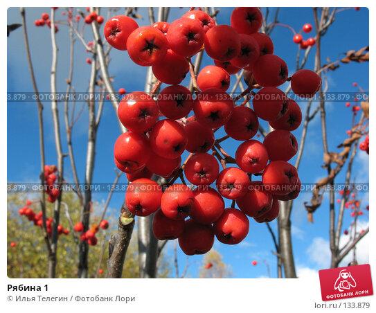 Купить «Рябина 1», фото № 133879, снято 29 сентября 2007 г. (c) Илья Телегин / Фотобанк Лори