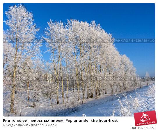 Ряд тополей, покрытых инеем. Poplar under the hoar-frost, фото № 130159, снято 18 декабря 2005 г. (c) Serg Zastavkin / Фотобанк Лори