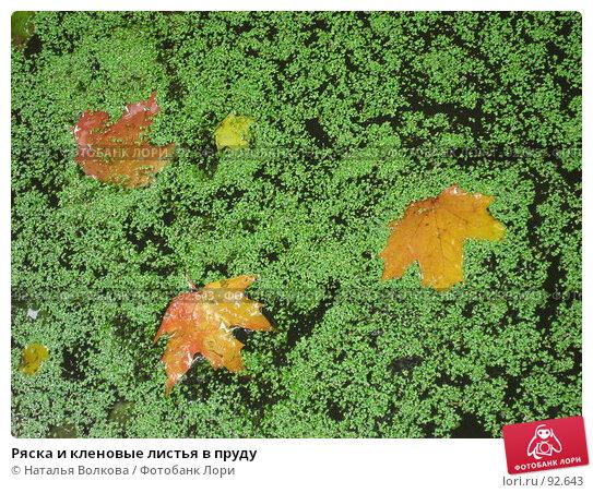 Купить «Ряска и кленовые листья в пруду», эксклюзивное фото № 92643, снято 23 сентября 2007 г. (c) Наталья Волкова / Фотобанк Лори
