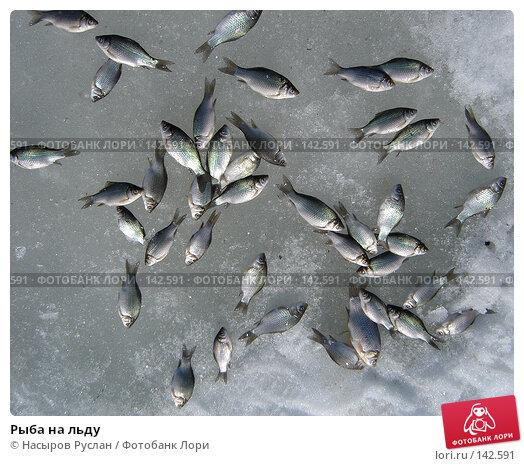 Рыба на льду, фото № 142591, снято 8 апреля 2007 г. (c) Насыров Руслан / Фотобанк Лори