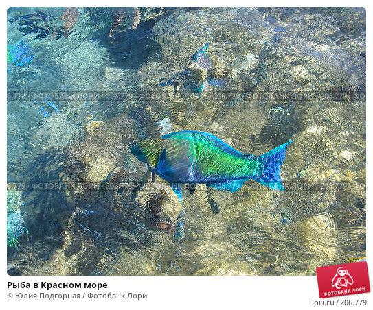 Рыба в Красном море, фото № 206779, снято 15 марта 2007 г. (c) Юлия Селезнева / Фотобанк Лори