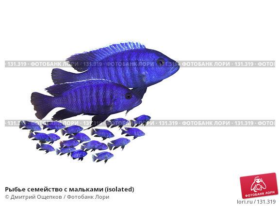 Рыбье семейство с мальками (isolated), фото № 131319, снято 22 февраля 2017 г. (c) Дмитрий Ощепков / Фотобанк Лори