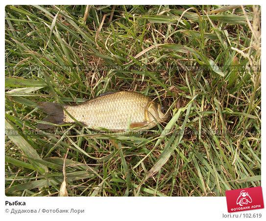 Рыбка, фото № 102619, снято 24 февраля 2017 г. (c) Дудакова / Фотобанк Лори