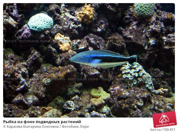 Рыбка на фоне подводных растений, фото № 159411, снято 17 августа 2007 г. (c) Карасева Екатерина Олеговна / Фотобанк Лори