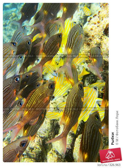 Рыбки, фото № 326963, снято 26 июня 2017 г. (c) Михаил / Фотобанк Лори