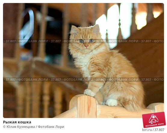Рыжая кошка, фото № 37807, снято 30 мая 2017 г. (c) Юлия Кузнецова / Фотобанк Лори