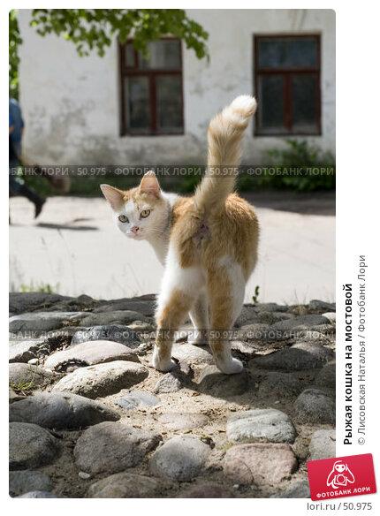 Рыжая кошка на мостовой, фото № 50975, снято 6 июня 2007 г. (c) Лисовская Наталья / Фотобанк Лори