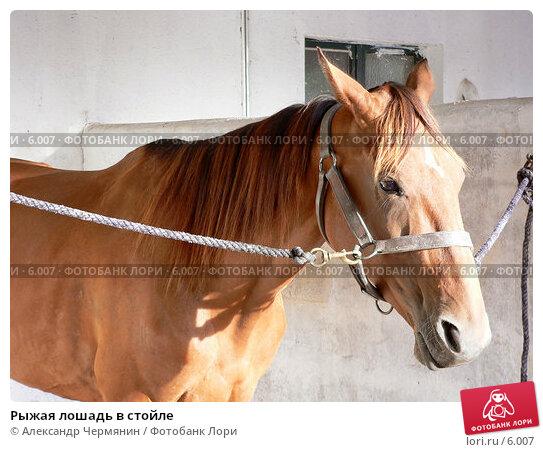 Купить «Рыжая лошадь в стойле», фото № 6007, снято 13 августа 2005 г. (c) Александр Чермянин / Фотобанк Лори