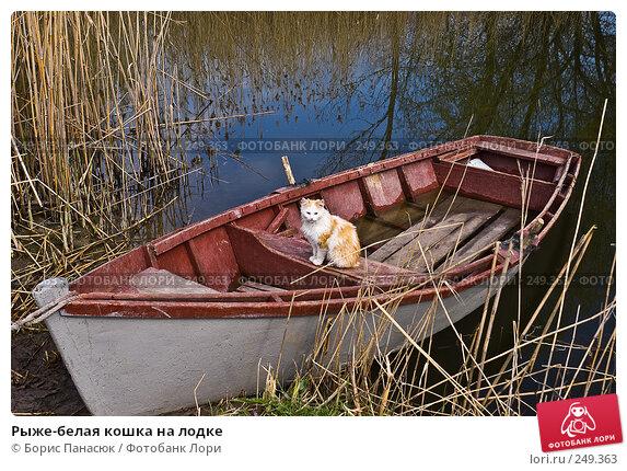 Рыже-белая кошка на лодке, фото № 249363, снято 11 апреля 2008 г. (c) Борис Панасюк / Фотобанк Лори