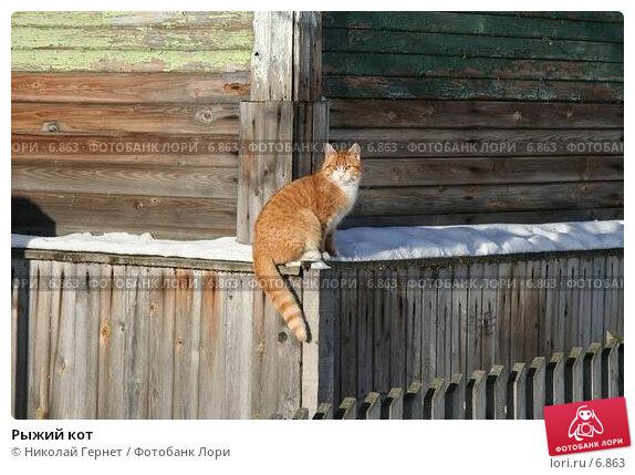 Рыжий кот, фото № 6863, снято 25 февраля 2006 г. (c) Николай Гернет / Фотобанк Лори