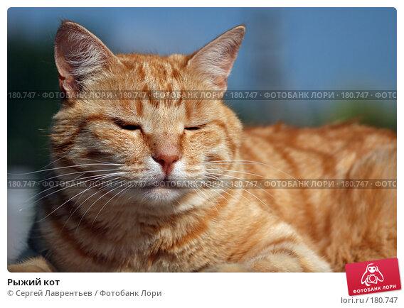 Рыжий кот, фото № 180747, снято 2 января 2005 г. (c) Сергей Лаврентьев / Фотобанк Лори
