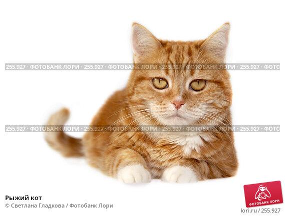 Рыжий кот, фото № 255927, снято 17 февраля 2008 г. (c) Cветлана Гладкова / Фотобанк Лори