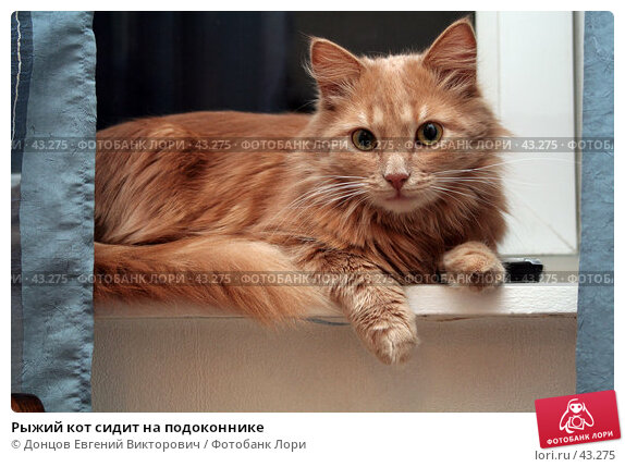 Рыжий кот сидит на подоконнике, фото № 43275, снято 29 марта 2007 г. (c) Донцов Евгений Викторович / Фотобанк Лори