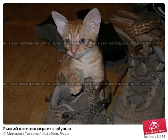 Купить «Рыжий котенок играет с обувью», фото № 8155, снято 20 августа 2006 г. (c) Минакова Татьяна / Фотобанк Лори