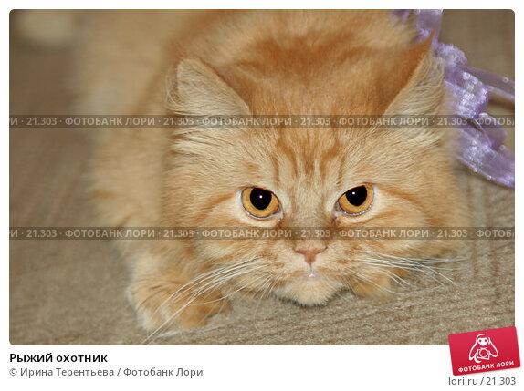 Рыжий охотник, эксклюзивное фото № 21303, снято 16 июня 2006 г. (c) Ирина Терентьева / Фотобанк Лори