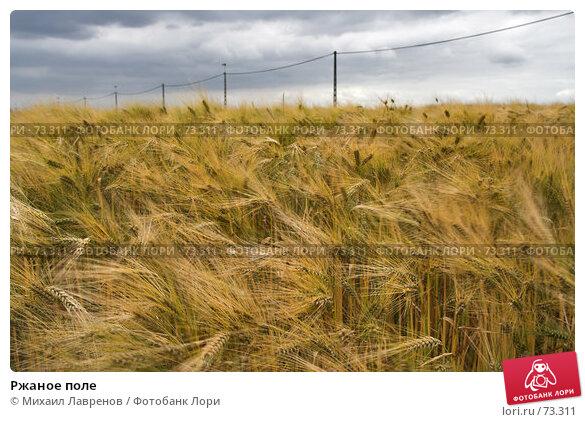 Ржаное поле, фото № 73311, снято 22 июня 2006 г. (c) Михаил Лавренов / Фотобанк Лори