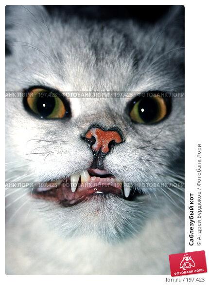 Саблезубый кот, фото № 197423, снято 26 декабря 2005 г. (c) Андрей Бурдюков / Фотобанк Лори