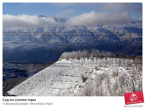 Купить «Сад на склоне горы», фото № 21815, снято 21 ноября 2006 г. (c) Валерий Шанин / Фотобанк Лори